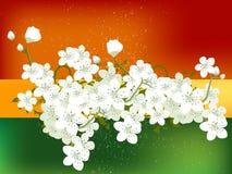 kwiat tło Zdjęcie Stock