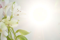 kwiat tła abstrakcyjne Fotografia Royalty Free
