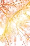 kwiat tła abstrakcyjne Obraz Royalty Free