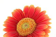 kwiat tło obraz royalty free
