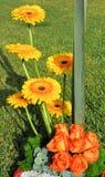 kwiat teraźniejszy Obraz Royalty Free
