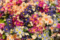 Kwiat tkanina i Plastikowi colourful kwiaty tło szczegółów tekstury okno stary drewniane Fotografia Royalty Free
