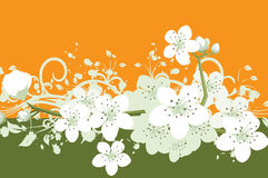 kwiat tło Obrazy Royalty Free