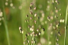 kwiat trawa Fotografia Stock