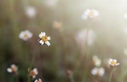 Kwiat trawa Fotografia Royalty Free