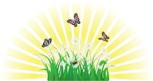 Kwiat, trawa, motyl i ladybird, royalty ilustracja