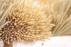 Kwiat trawa zbliżenie suchej trawy kwiat Fotografia Royalty Free