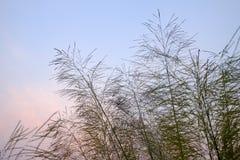Kwiat trawy nieba tło zdjęcia royalty free