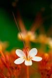 kwiat trochę Zdjęcia Stock