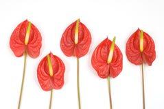 kwiat tropikalny obraz stock