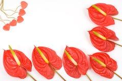 kwiat tropikalny zdjęcia stock