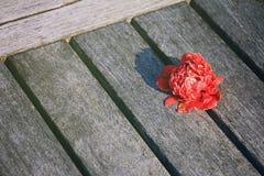 Kwiat, tropikalny czerwony kwiat obraz royalty free