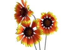 kwiat trzy Obraz Stock