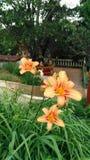 kwiat trzy Zdjęcie Royalty Free