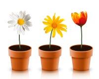 kwiat trzy Zdjęcie Stock