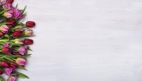 Kwiat, tulipanowy chodnikowiec Fotografia Royalty Free