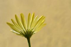 Kwiat underneath Obraz Royalty Free