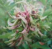 kwiat unikalny Zdjęcie Royalty Free