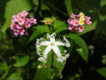 kwiat unikalny Obrazy Royalty Free