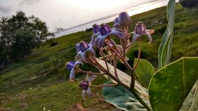 kwiat unikalny Zdjęcia Stock