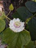 kwiat unikalny Obraz Royalty Free