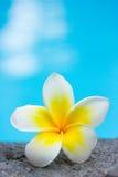 kwiat uroczyn basen popływać tropical zdjęcia royalty free
