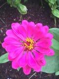 Kwiat władza fotografia royalty free