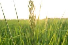 Kwiat wśród łąki i niebieskiego nieba Zdjęcie Stock