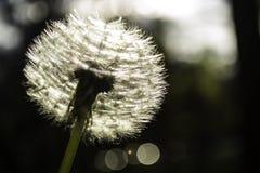 Kwiat w świetle słonecznym Obrazy Stock