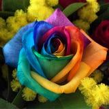 Kwiat władza Obrazy Royalty Free