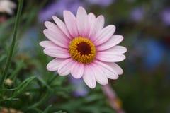 Kwiat władza Fotografia Stock