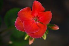 Kwiat władza Zdjęcia Royalty Free