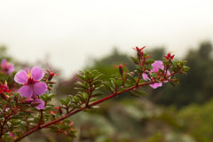 kwiat w Asahidake Obrazy Royalty Free