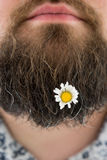 Kwiat w brodzie Zdjęcie Royalty Free