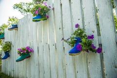 Kwiat w bucie na drewnianym ogrodzeniu Fotografia Stock