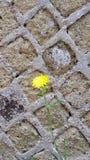 Kwiat w cemencie obraz stock