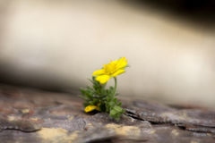 Kwiat w cortex Zdjęcia Stock