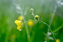 Kwiat w deszczu Obraz Stock