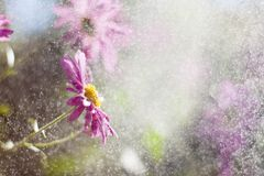 Kwiat w deszczu z światłem słonecznym Zdjęcia Royalty Free