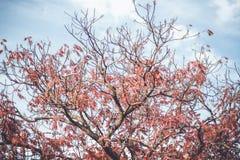Kwiat w Japan fotografia royalty free