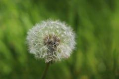 Kwiat w Kalmthoutse Heide Zdjęcia Royalty Free