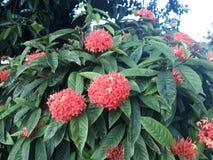 Kwiat w lecie Obrazy Royalty Free