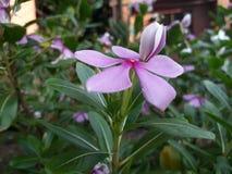 Kwiat w lecie Zdjęcie Stock