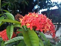 Kwiat w lecie Fotografia Royalty Free