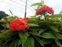 Kwiat w lecie Fotografia Stock