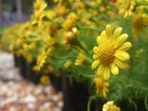 Kwiat w lesie zdjęcia stock