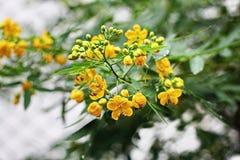 Kwiat w letnim dniu Zdjęcie Stock