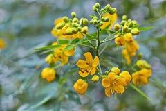 Kwiat w letnim dniu Fotografia Stock