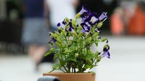 Kwiat w mieście Cakovec Zdjęcia Stock