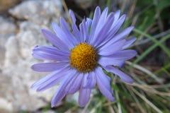 Kwiat w naturze obraz royalty free